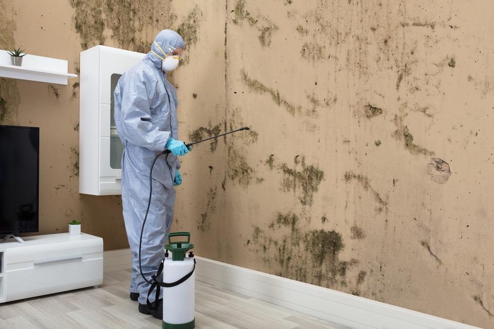 schimmel im wohnzimmer darauf sollten sie achten gesund wohnen