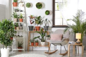 Gesundes Raumklima: Die optimale Pflanze für jeden Raum finden